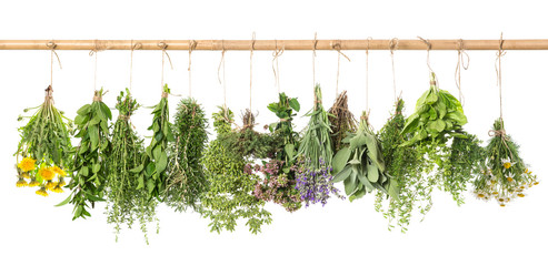 Herbs hanging isolated on white. basil, rosemary, thyme, dandeli