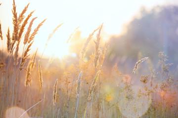 Art autumn sunny nature background