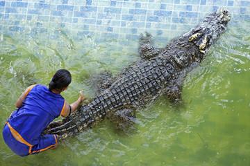 "Traditional for Thailand ""Show of crocodiles"" Bungboraped nakhonsawan thailand"