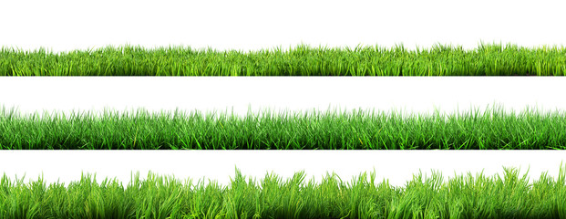 trawa na białym tle