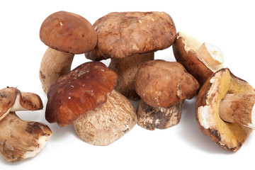Several mushrooms on white background