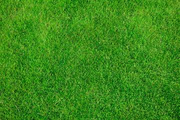 Grass field texture