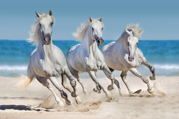 Horses run along the coast