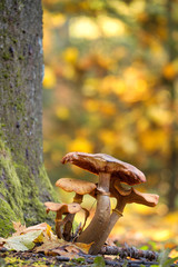 Zdjęcie grzybów