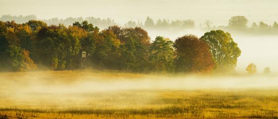 Poranne mgły spowijające jesienny las