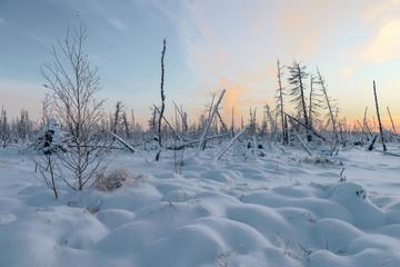 Winter landscape of the taiga, the Yamal Peninsula