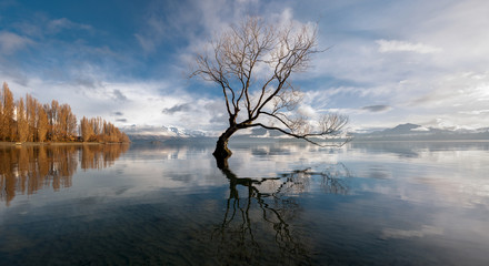 Lone tree, Lake Wanaka, New Zealand.