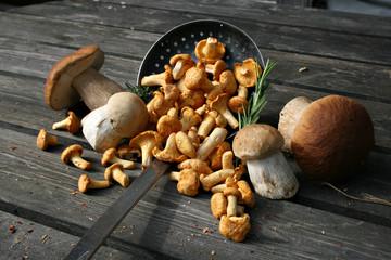 organiczny styl życia grzyby składnik shabby chantere kurki porcini naturalne rustykalne