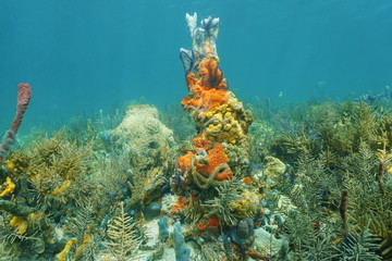 Caribbean coral reef with colorful marine life