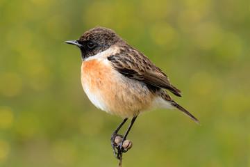 Pretty bird on nature