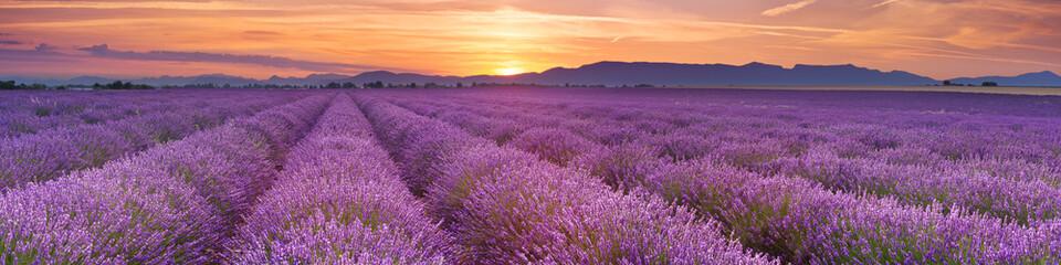 Wschód słońca nad polami lawendy w Provence, Francja