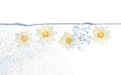 Cztery białe kwiaty pod wodą i pęcherzyki na białym tle
