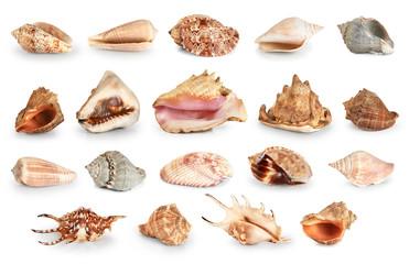 Shells isolated on white background.
