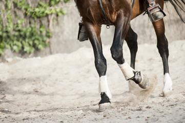 training horse detail