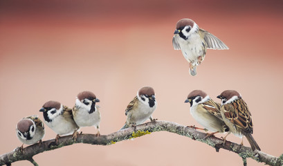 a group of sparrows birds on a tree branch sitting in the spring