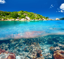 Coral reef at Seychelles
