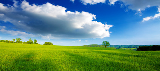 Colorful landscape with field and tree.