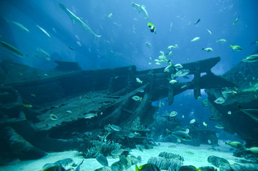 Underwater world - fishes swimming around shipwreck