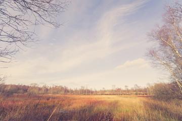 Swamp area at autumn