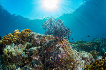 nurkowanie w kolorowej rafie podwodnej