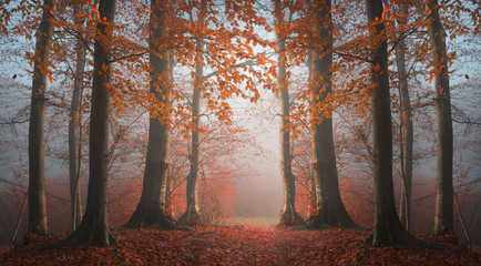 Fairy tale forest symmetry in the fog