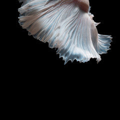 Abstract fine art fish tail free form of Betta fish