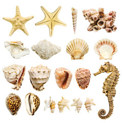 composition of most common seashells and mollusk