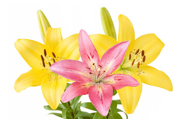 Yellow and pink lily flowers bunch isolated on white background