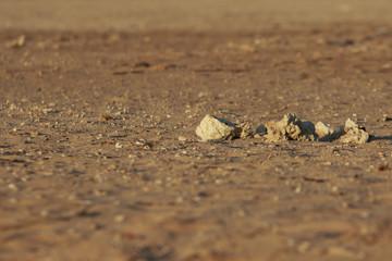 Stones on Mars