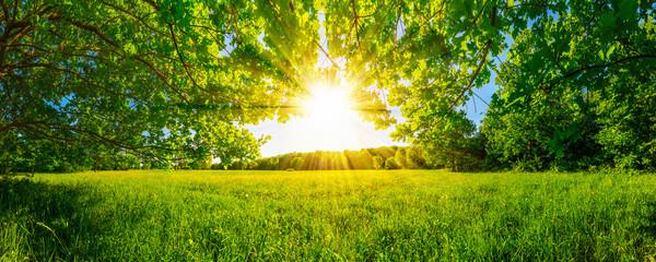 Łąka otoczona drzewami w słońcu