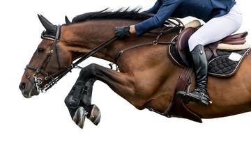 Skoki koni, sporty jeździeckie, na białym tle