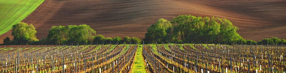 Francja winnica wieczorem