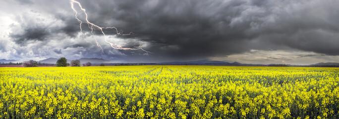 Thunderstorm  on rapeseed field