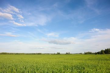 Summer clear field
