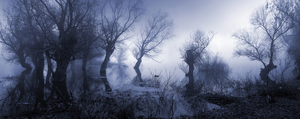 Creepy landscape showing misty dark swamp in autumn.