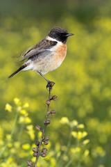 Piękny dziki ptak