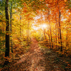 Forest Road in the autumn. Autumn Landscape.