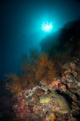 Coral reef in the deep of the Indian ocean