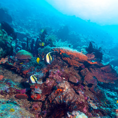 Moorish Idols and Sea Bottom of Ecosystem