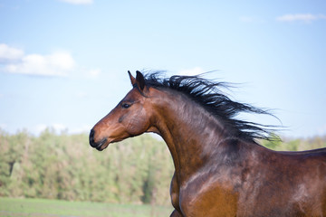 Portrait of the light brown horse on the green nature background