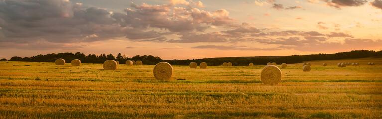 Krajobraz w lecie, żniwa, panorama