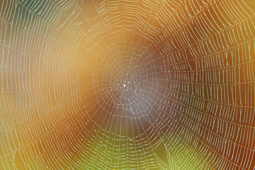 Spider web with morning dew on a colorful  background