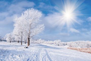 Zimowy pejzaż z drzewa i drogi