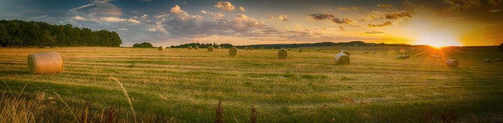 Krajobraz w lecie, zachód słońca, zebrane pole kukurydzy z belami słomy, panorama
