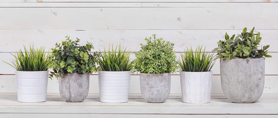 Doniczkowe rośliny w białych doniczkach i betonie na tle biały b