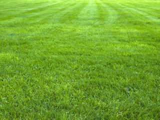 fresh spring green grass, green grass texture or background