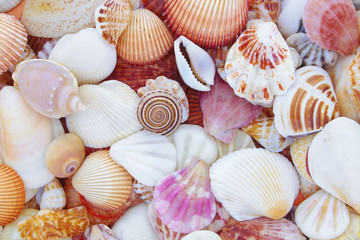 Mixed colorful sea shells as background