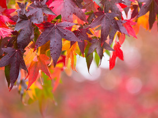 Fall leaves Concept in red and purple