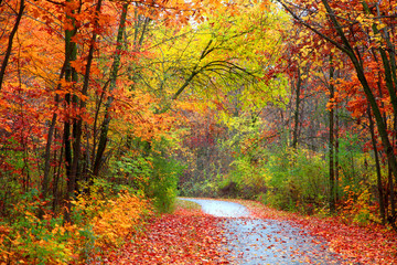 Piękna alBeautiful aleja w kolorowym jesień timeley w kolorowym jesień czasie