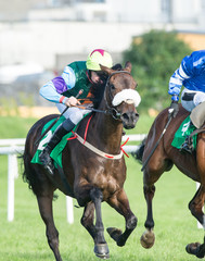 Close-up of race horse and jockey competing in a race